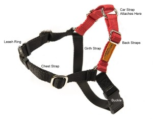 Wonder Walker harness