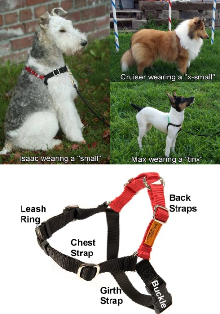 Image Result For How To Measure Dog